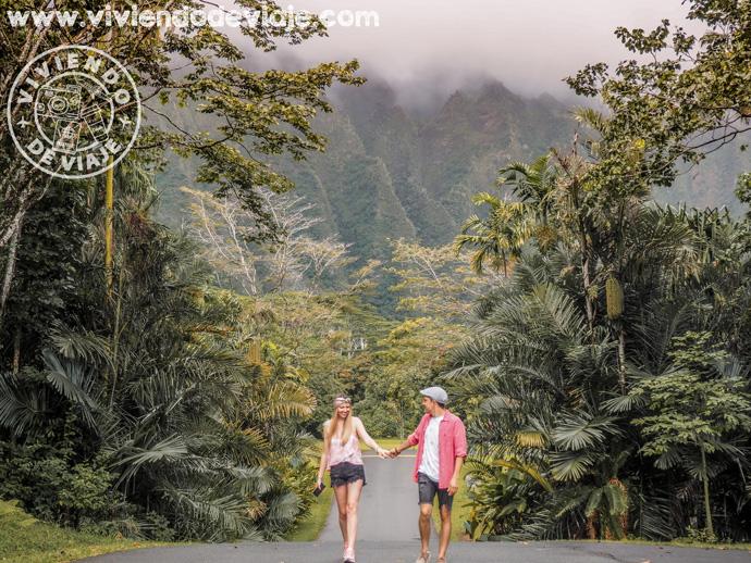 Jardín Botánico de Ho'omaluhia, visita imprescindible que hacer en Oahu