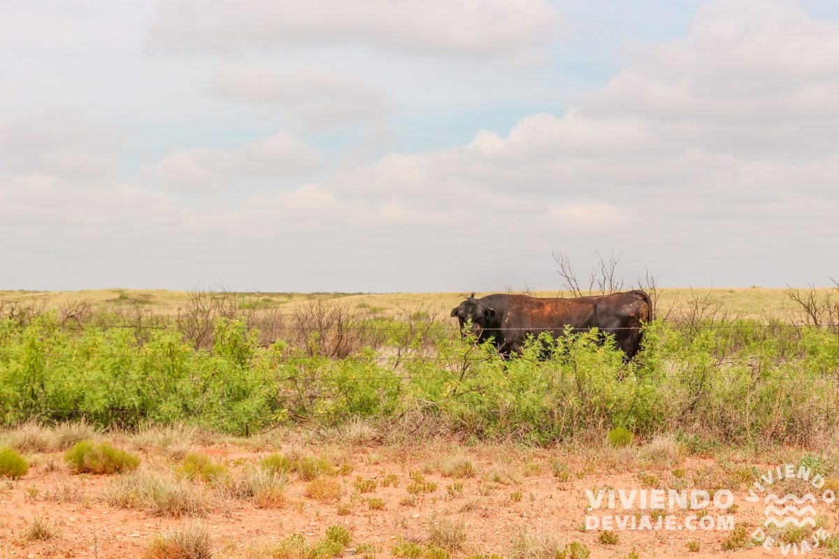 Estado de New Mexico | Ruta 66