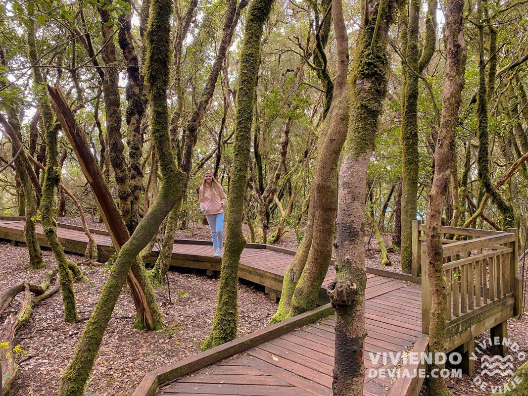 Sendero de los Sentidos en el Parque Rural de Anaga