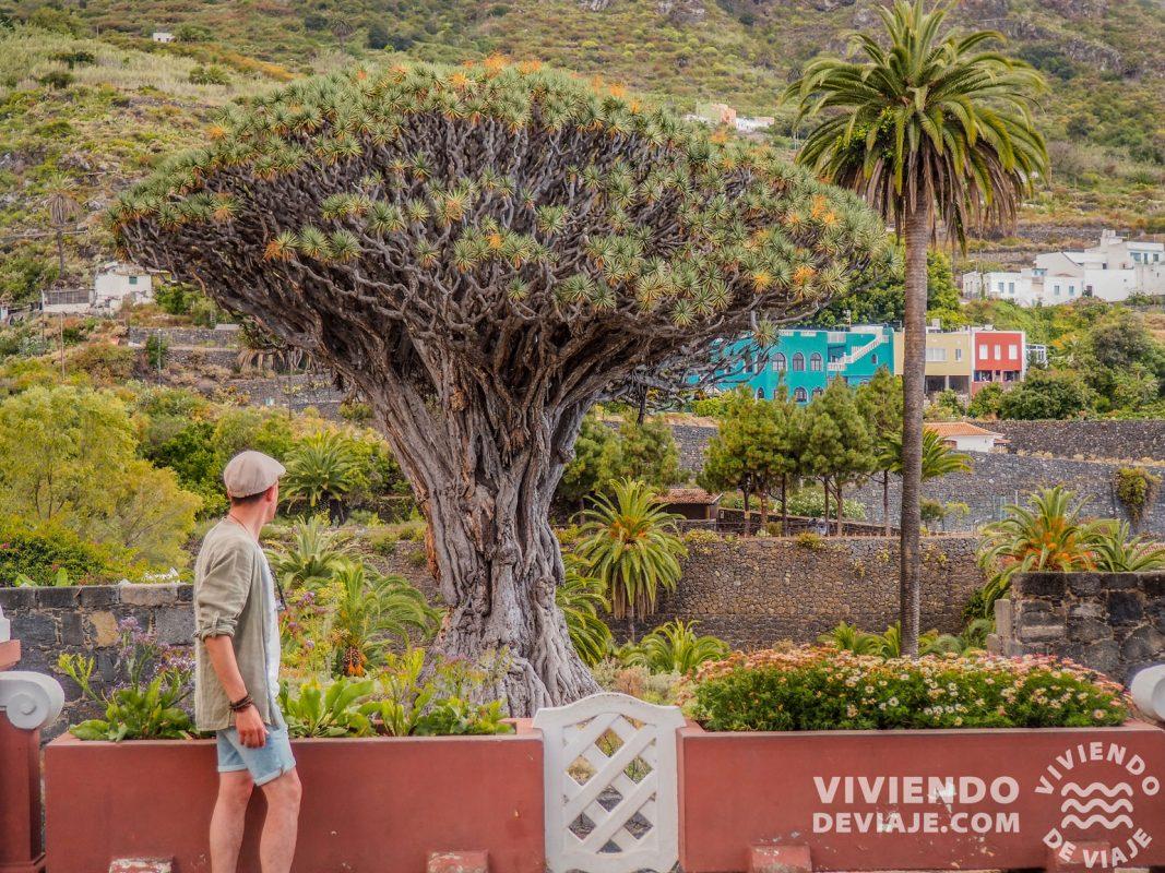 Drago Milenario | Tenerife en 7 días